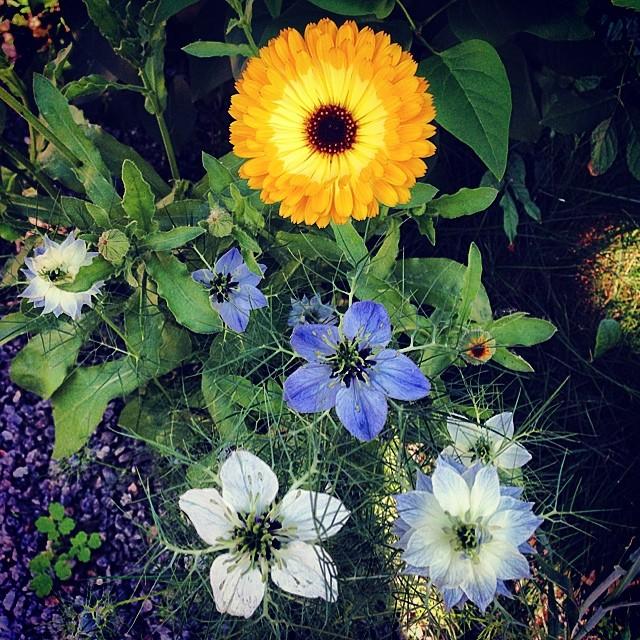 Blütenhaft