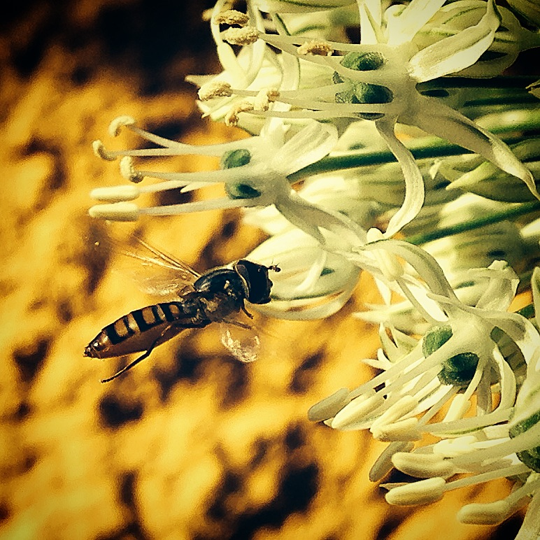 Blumengrüße - Im Anflug