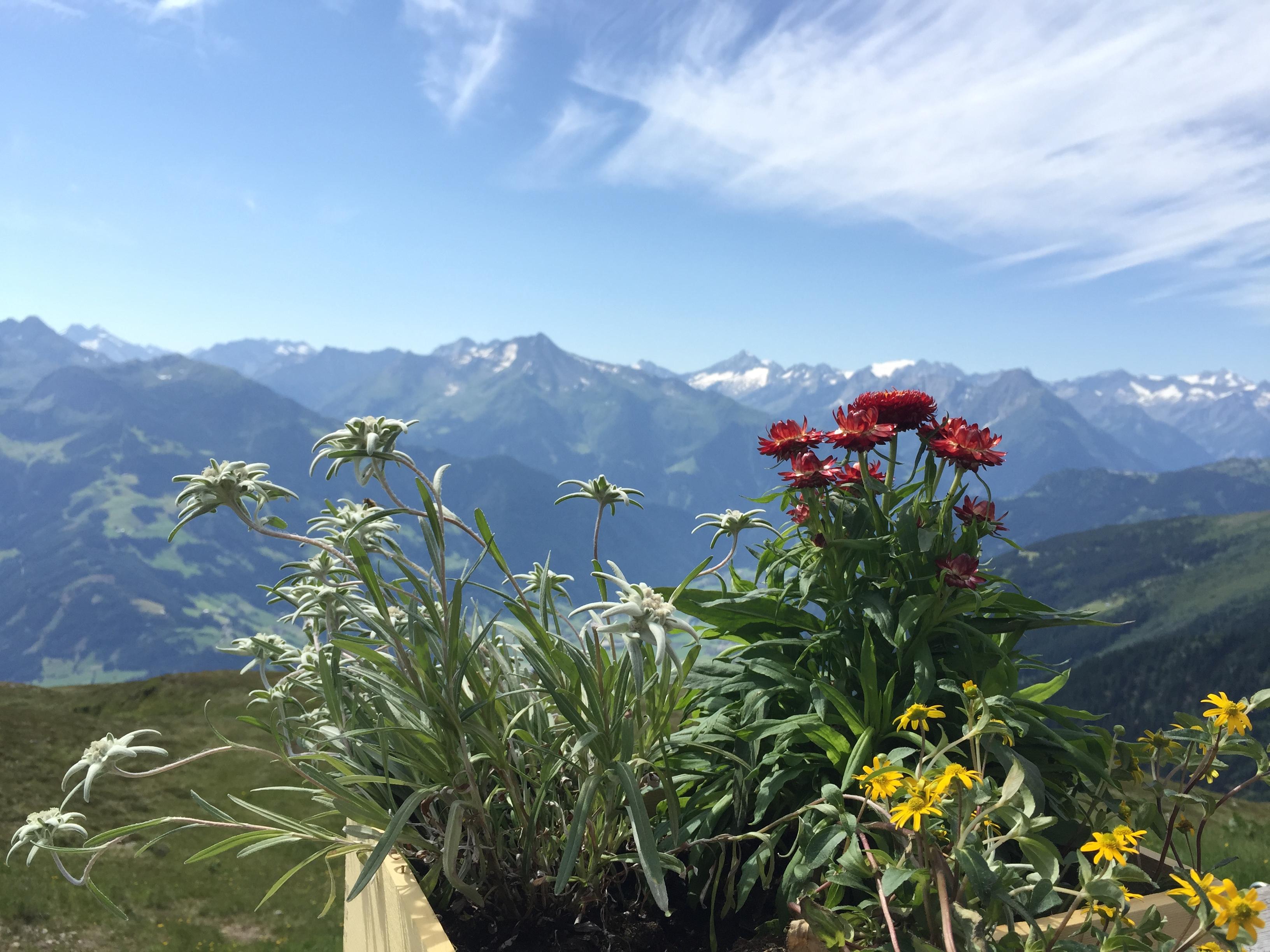 Kristallhütte mit Blumengruß