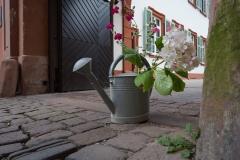 Heidelberger Blumengruß