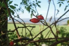Roter Gruß