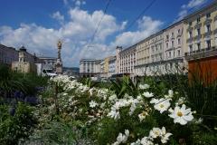 Linzer Blumenmeer
