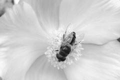Geküsste Blume