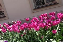 Blumengrüße - Tulpen