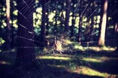 Spinnefeind!