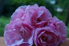 Stille Blumen