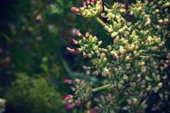 Pflanzenzauber