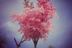 Blütenstil