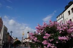 Blumengrüße - Stadtplatz Straubing