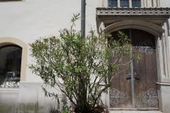 Kirchenvorsteher - Orleanderpracht
