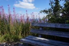 Blumengrüße - Am Arber