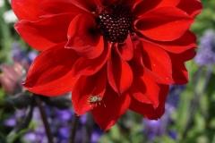 Blumengrüße