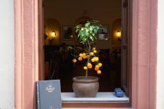 Heidelberg mediteran