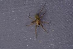 Ich glaub ich Spinne