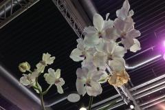 Fliegende Orchidee
