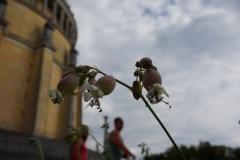 Blumengrüße Befreiungshalle Kelheim
