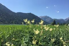 Zillertaler Blumengrüße
