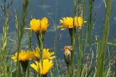 Blumengrüße - An der Donau