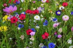 Blumengrüße - Bunte Blumenwiese