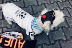 Luna im WM-Fieber
