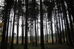 Baumlinien