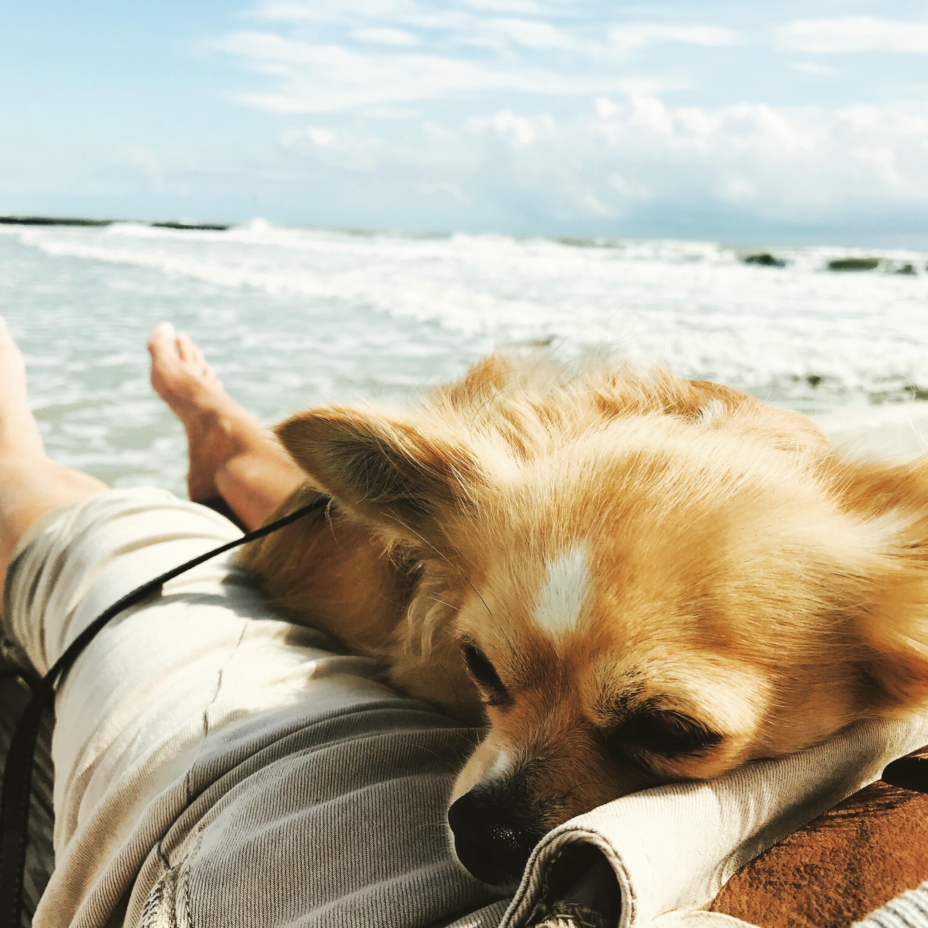 Emma - Mundwerk Chihuahua im Glück