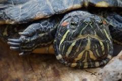 Schildkrötenblick