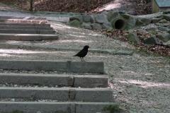 Vogeltritt