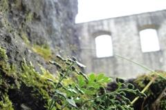 Burgwelten
