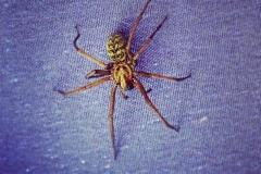 Spinnefeind
