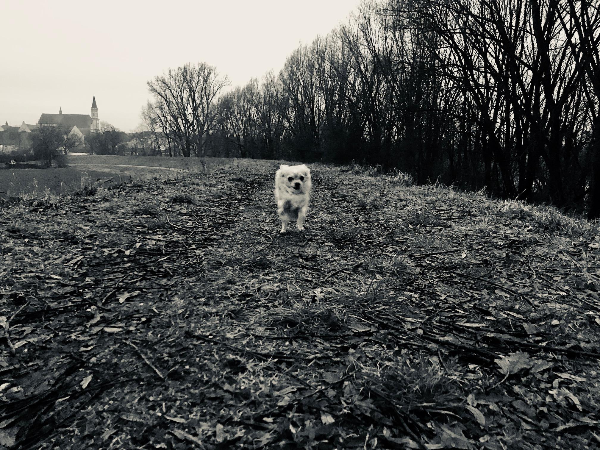 Auf dem Damm