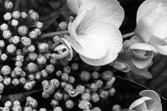 Blumenmomente