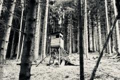 Der Wald vor lauter Bäume
