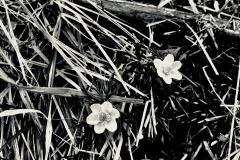 Blumenpunkte